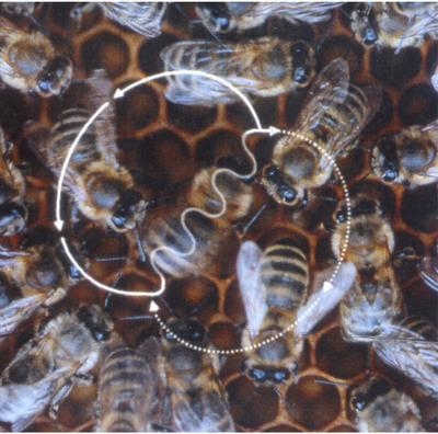 baile_abejas